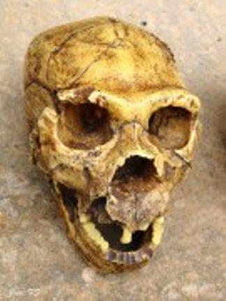 Miguelón, el mejor cráneo conservado en el planeta de nuestros antepasados hace 500.000 años. Fue encontrado en la Sima de los Huesos de Atapuerca