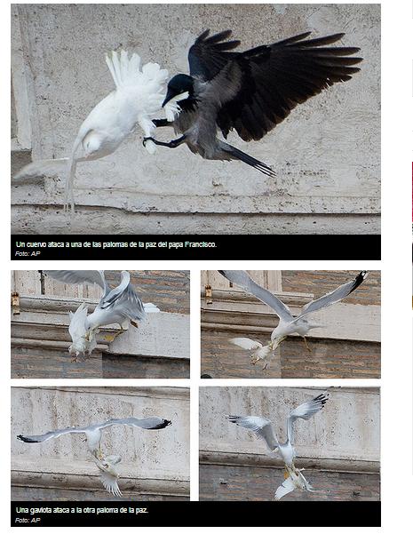Imagenes AP en: http://www.peopleenespanol.com/article/las-palomas-de-la-paz-del-papa-francisco-atacadas-por-un-cuervo-y-una-gaviota-fotos